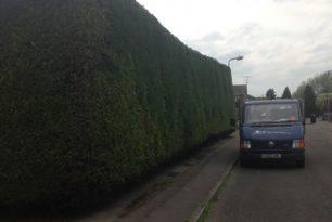 Hedge Trimming In Aylesbury