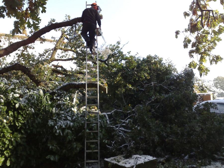 Oak Tree Removal Princes Risborough