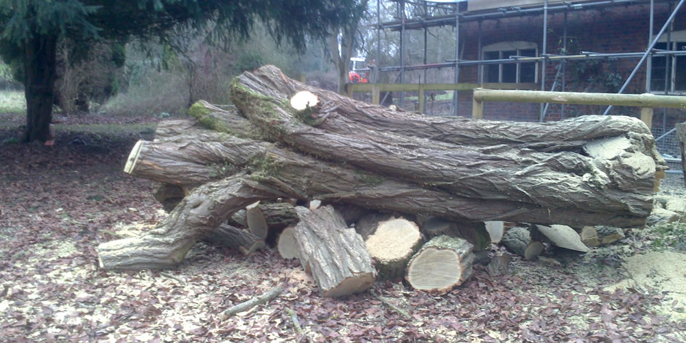 Tree felling and removal in Oxford
