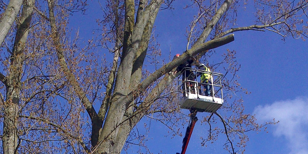 Tree services work in Oxford