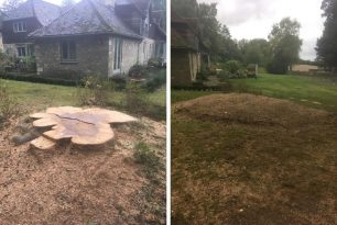 Large Beech Tree Stump Grinding In Oxfordshire