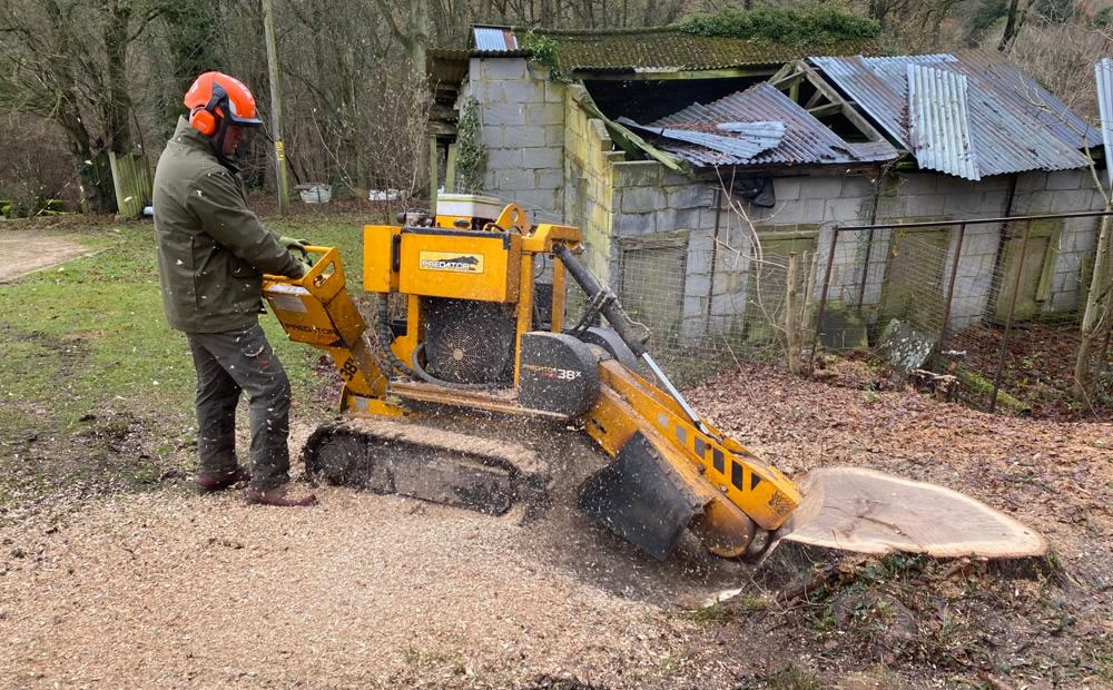 Stump grinding service in Thame