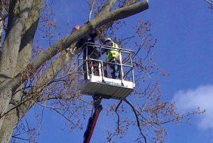 Crown Raising For Poplar Trees Near Thame