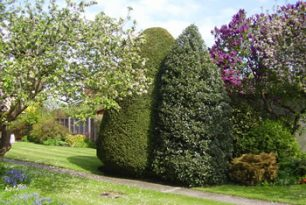 Towersey Hedge Trimming & Pruning
