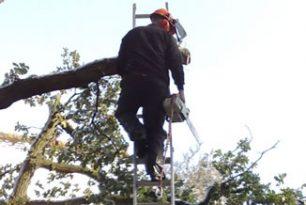 Storm Damaged Oak Tree In Lacey Green