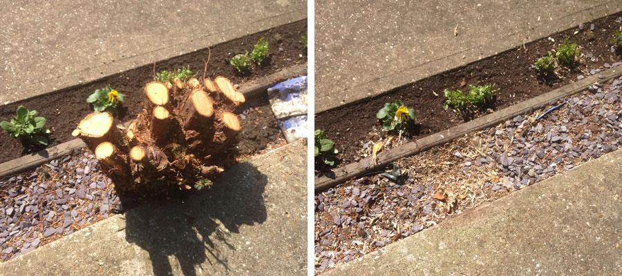 Conifer Stump Grinding in Aylesbury