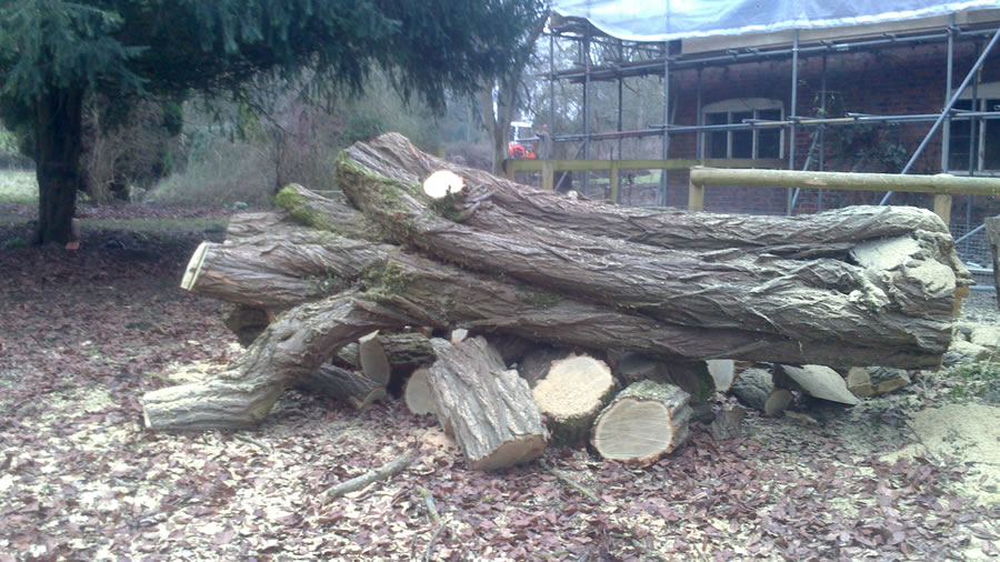Tree removal in Aylesbury