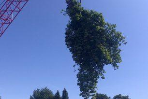 Tree Felling In Oxford