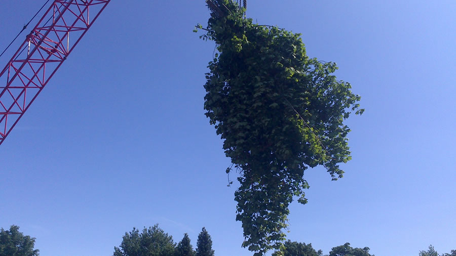 Tree Removal In Oxford