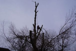 Willow Tree Reduction In Princes Risborough