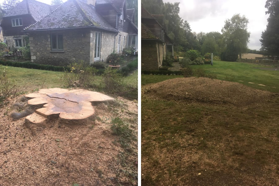 Beech tree stump grinding in Oxfordshire