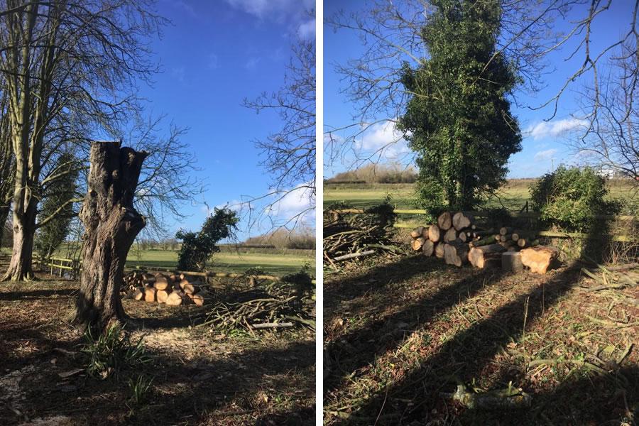 Large chestnut tree felled in Thame