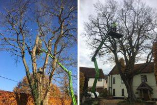 Crown Reduction Of Hornbeam Tree In Bledlow