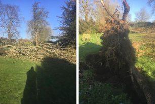 Storm Damage Poplar Removal In Brill